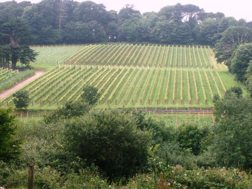 Polgoon Vineyard (2)(1)