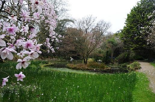 Trewidden Garden, Cornwall
