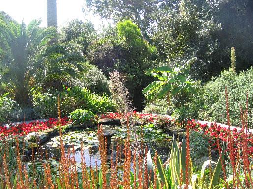Gärten in Cornwall: Abbey Gardens auf der Insel Tresco