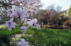 Trewidden Garten Cornwall