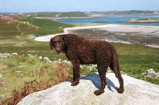 hundfreundliches Strande in Cornwall