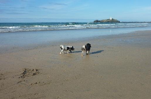 hundfreundliches Strande Cornwall
