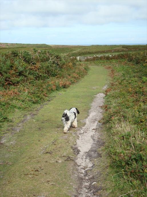 Hundwanderweg Cornwall
