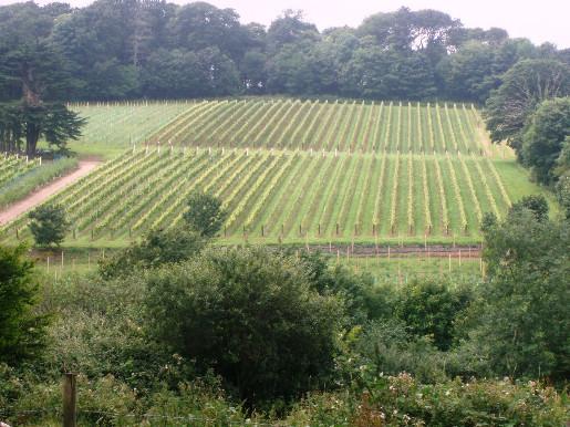 Ein kornisches Weingut mit Obstplantage unweit von Penzance.