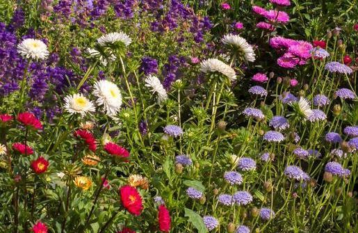 Typische englische Garten