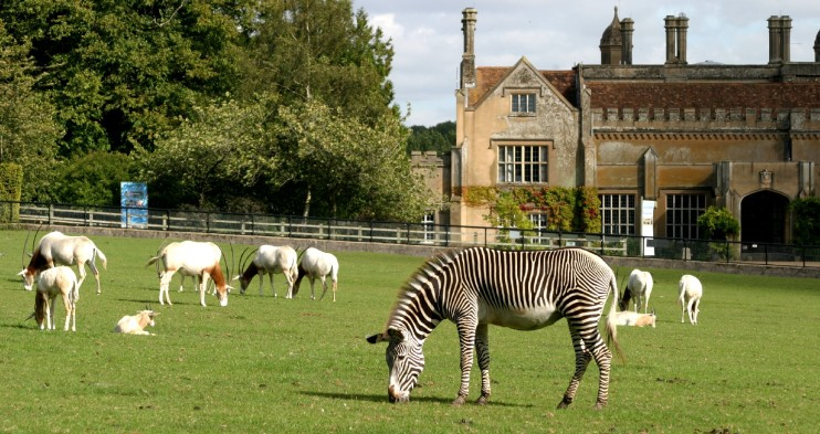 marwell_hall_and_animals